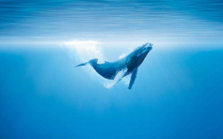 The 52 Hertz Whale