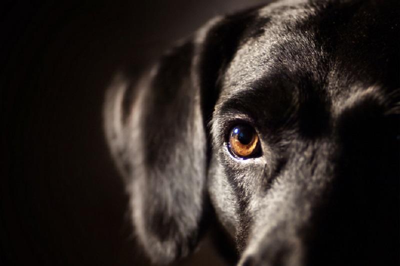 Anjing Tersedak