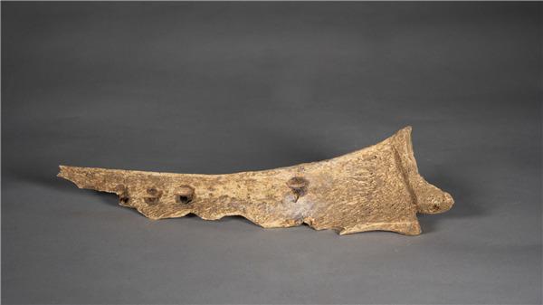 Tulang Oracle