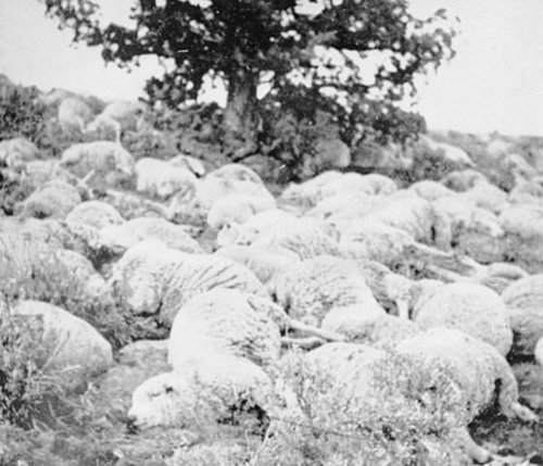 Dugway Sheep Incident