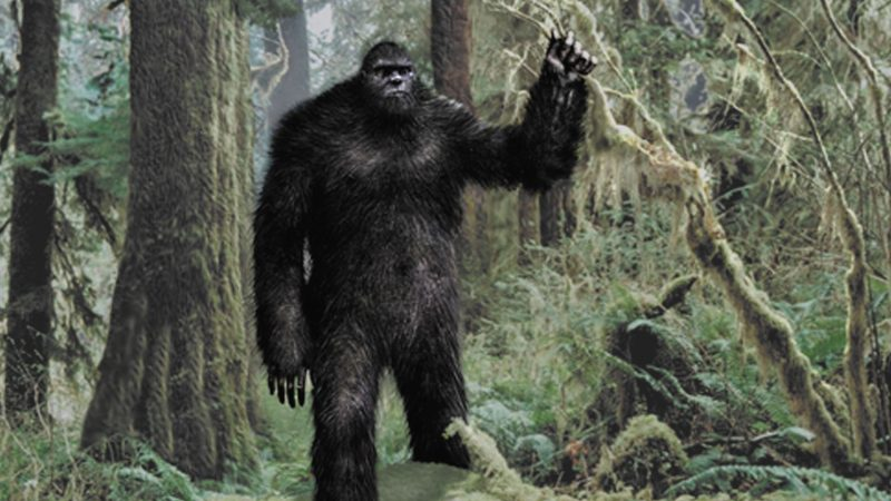 Fenomena BigFoot