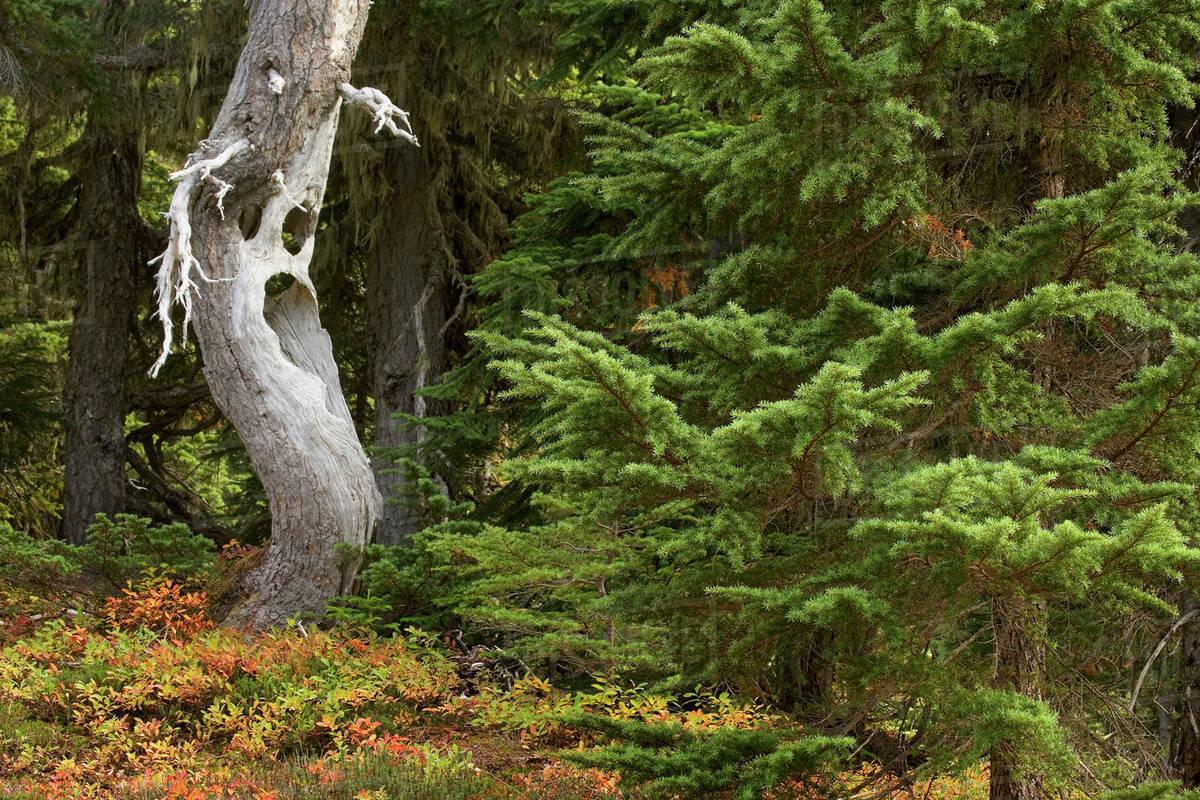 Misteri Orang Yang Hilang di Gunung Rainier