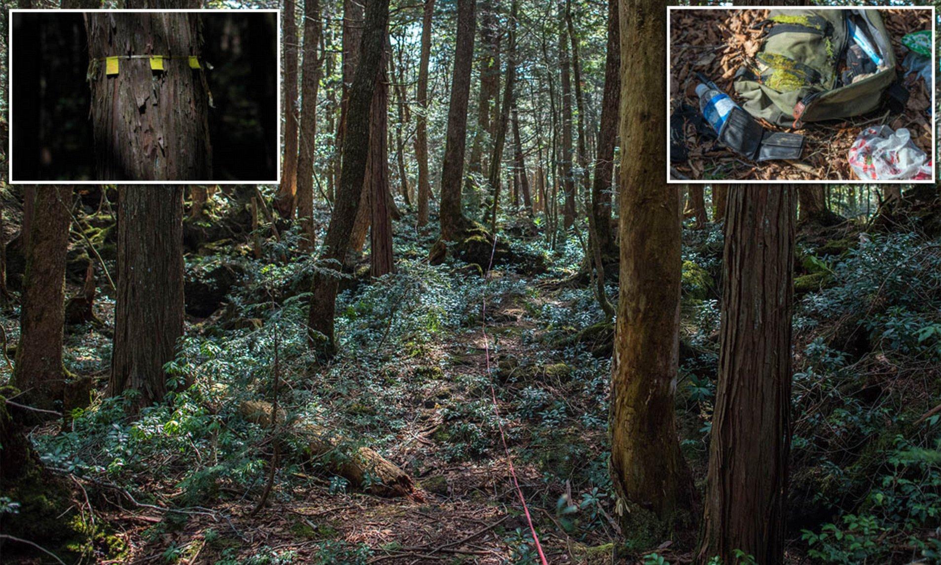 Aokigahara, Hutan Paling Angker dan Berhantu di Jepang