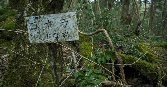 Hutan Terangker di Jepang