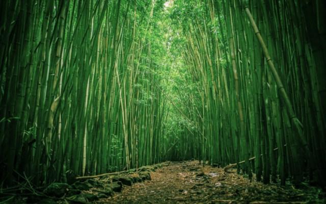 Ilustrasi Rumpun Bambu di Sakaide