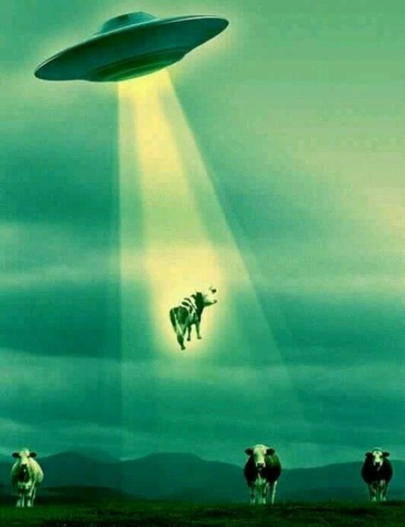 Kasus Penculikan Sapi Alien